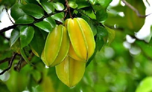 Tuyệt chiêu dưỡng trắng, căng da mặt nhanh chóng từ trái khế - a 10 VRHT