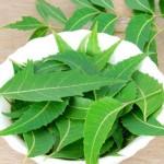 Làm đẹp da, trị mụn cực kỳ hiệu quả với lá cây sầu đâu (lá neem Ấn Độ) - 1434358802 iwdstoc dv4 syyq 150x150