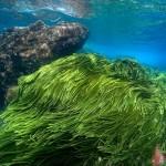 Tảo Spirulina là gì? Tác dụng trị nám của tảo Spirulina (tảo mặt trời) như thế nào? - hình tao bien spirulina 150x150