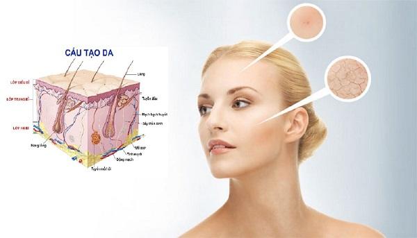 Collagen Peptide là gì? Collagen Peptide loại nào tốt? - cau truc da