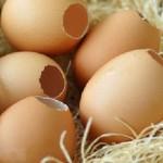 Làm trắng da và tẩy tế bào chết bằng vỏ trứng gà - hình vỏ trứng gà 150x150