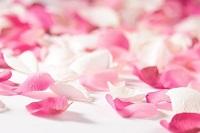 c%C3%A1nh hoa h%E1%BB%93ng Mặt nạ chống lão hóa từ thiên nhiên bằng hoa hồng và đất sét giúp bạn trẻ lại tuổi 18