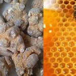 Bài thuốc chữa bệnh dạ dày bằng mật ong tam thất - tam that mat ong 1 150x150