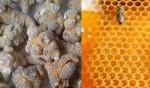 Bài thuốc chữa bệnh dạ dày bằng mật ong tam thất - tam that mat ong 1 150x88