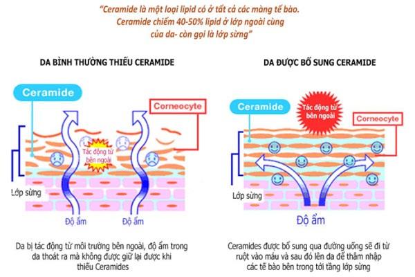 Tại sao Ceramide lại quan trọng đối với làn da
