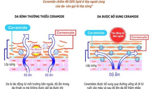 Tại sao Ceramide lại quan trọng đối với làn da? - cach chong lao hoa da mat1 600x350