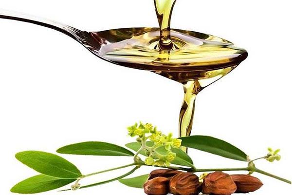 Gần Tết rồi, hãy dùng dầu cây tràm trà để loại bỏ mụn đầu đen - dau jojoba