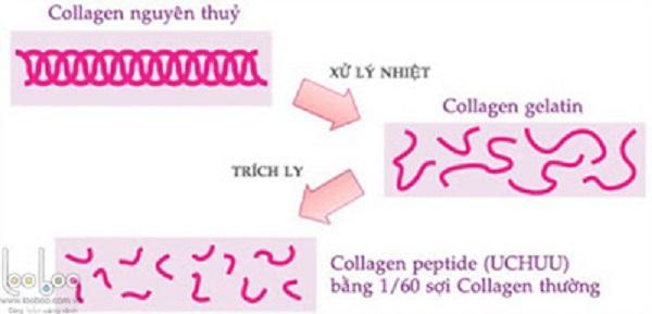 loi ich cua viec bo sung collagen