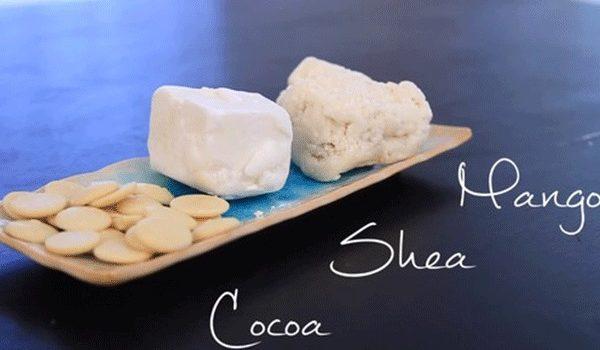 Bơ hạt mỡ và bơ ca cao bạn chọn loại nào để làm đẹp da