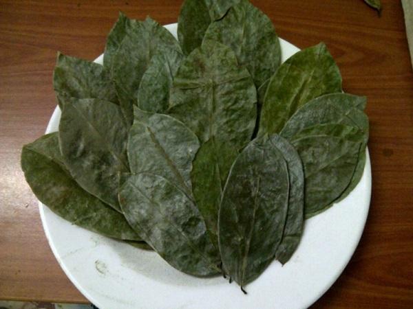 Cách dùng cây xăng sê chữa đau dạ dày