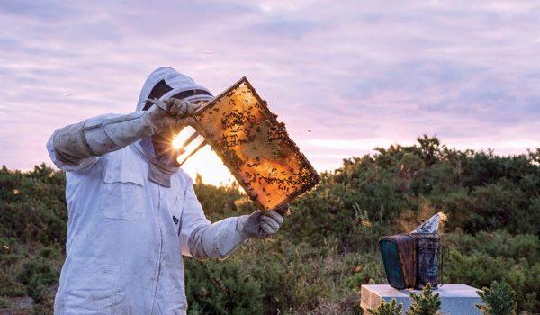 10 loại mật ong mà bạn nên biết - mật ong Manuka 600x350