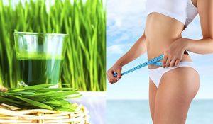 5 lợi ích tốt nhất của nước ép cỏ lúa mì đối với da, tóc và sức khỏe - nước ép cỏ lúa mì giảm cân 300x175