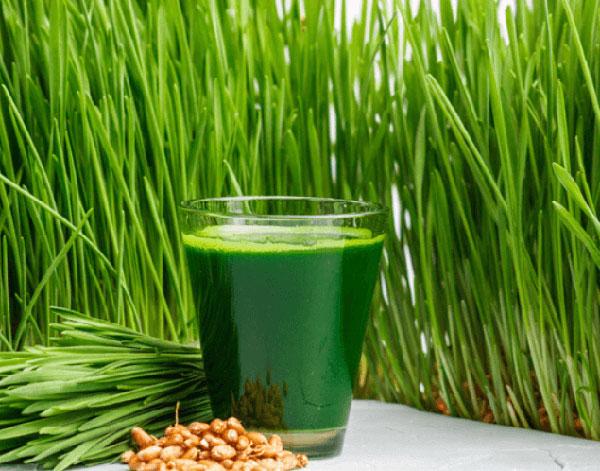 5 lợi ích tốt nhất của nước ép cỏ lúa mì đối với da, tóc và sức khỏe - nuoc ep co lua mi
