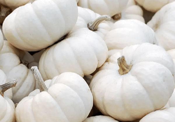 15 lợi ích tốt nhất của bí ngô trắng đối với làn da, mái tóc và sức khỏe - bi ngo trang 1