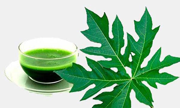 8 công dụng hấp dẫn của nước ép lá đu đủ cho làn da sáng và sức khỏe - nuoc ep la du du